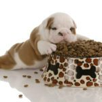 When To Switch To Adult Dog Food