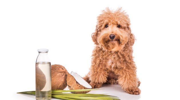 Can Dogs Eat Coconut